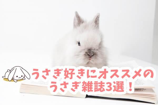 うさぎ好きにオススメのうさぎ雑誌3選!