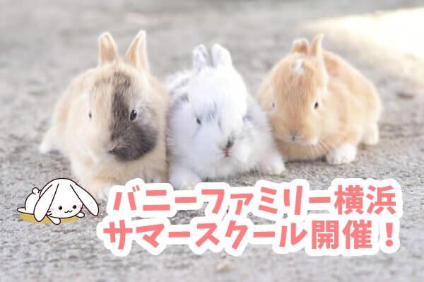 うさぎのサマースクール開催!バニーファミリー横浜