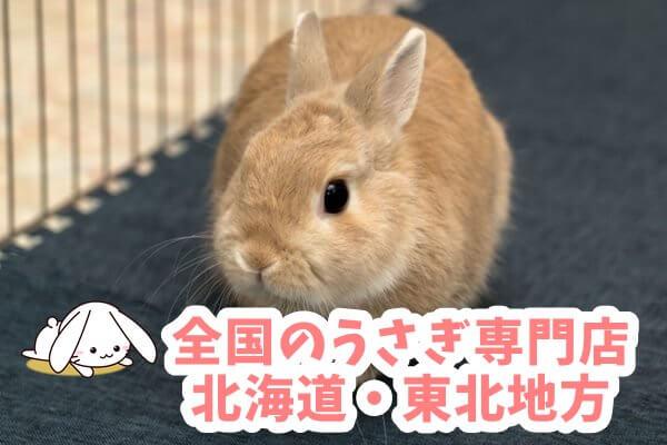 全国のうさぎ専門店 北海道・東北地方