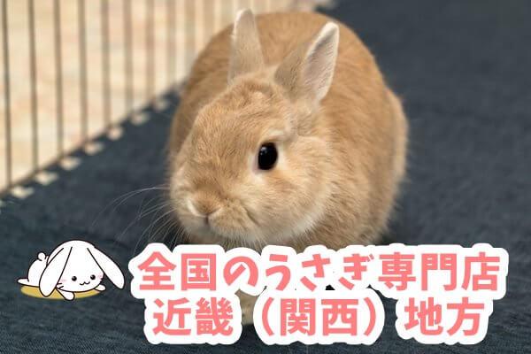 全国のうさぎ専門店 近畿(関西)地方