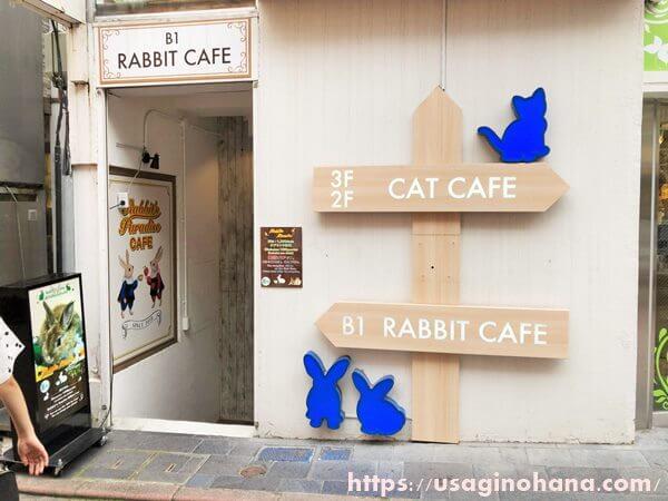 うさぎカフェ「うさぎパラダイス渋谷スペイン坂店」