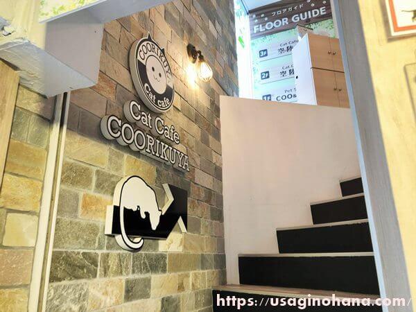 うさぎパラダイス渋谷スペイン坂店猫カフェ
