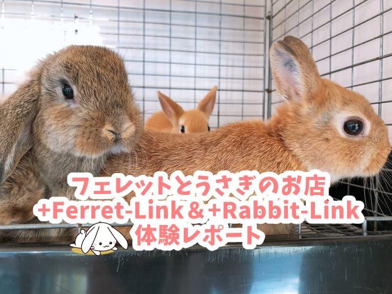 フェレットとうさぎのお店+Ferret-Link&+Rabbit-Link(フェレット・リンク&ラビット・リンク)体験レポート