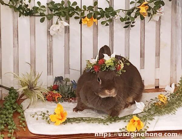 フェレットとうさぎのお店「+Ferret-Link&+Rabbit-Link(フェレット・リンク&ラビット・リンク) 」の写真スタジオ