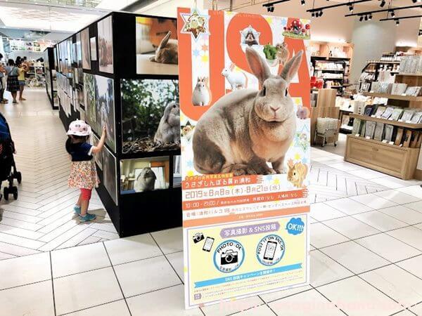 うさぎしんぼる展in浦和/うさぎの合同写真展示