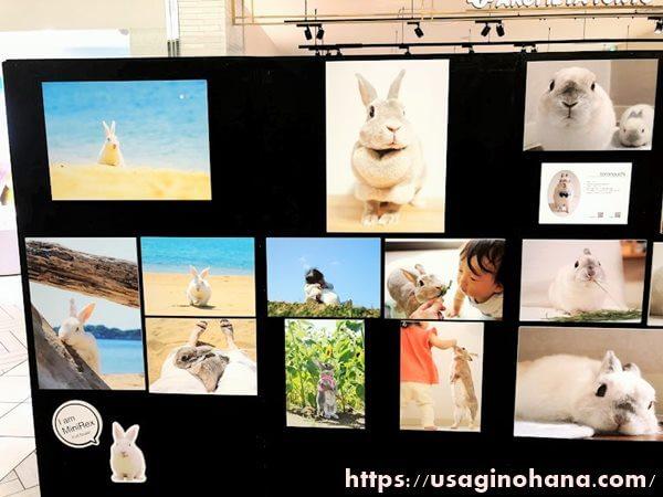 うさぎしんぼる展in浦和/Time is Bunny