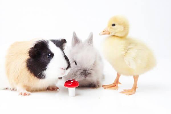 愛玩動物飼養管理士とは