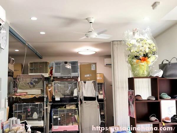うさぎ専門店DAN'SHOUSE(ダンズハウス)新店のペットホテル
