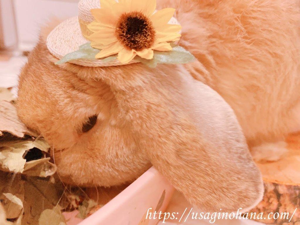 ラビットパーク藤沢(Rabbit Park FUJISAWA)とラビットランの魅力まとめ